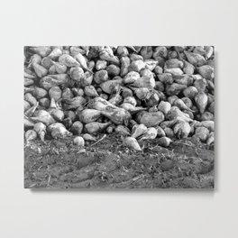 """""""Fields 5016"""" Metal Print"""