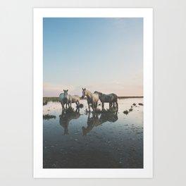 Camargue Horse II Art Print