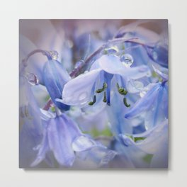 Bluebell Glade Metal Print