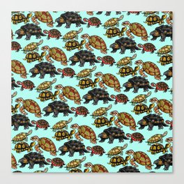 Turtle Skin Canvas Print