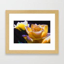 The  Last Rose of Summer Framed Art Print