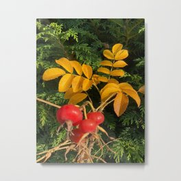 Red and Orange Metal Print