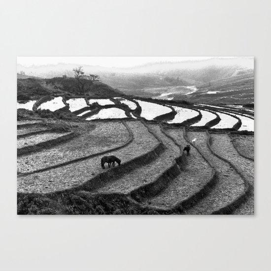 Horses on rice paddies in northern Vietnam Canvas Print