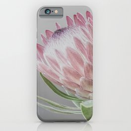 Protea In Isolation iPhone Case