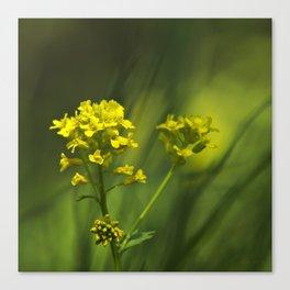 Wintercress Wildflowers Canvas Print