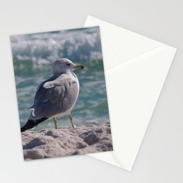 Gulf Gull Stationery Cards