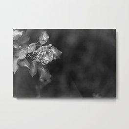 Monochromatic rose black and white bnw Metal Print