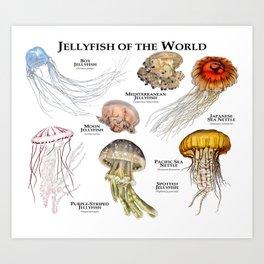 Jellyfish of the World Art Print