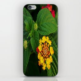 Red and Yellow Lantana Flower and Green Leaves iPhone Skin