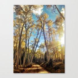 : aspens a glow : Canvas Print