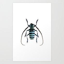 Anoplophora Graafi Beetle Art Print