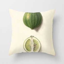 Vintage Illustration of a Lime Throw Pillow