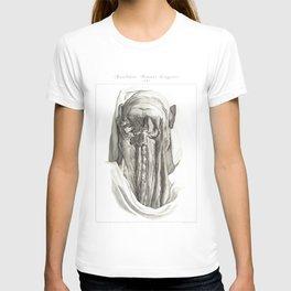 Human Anatomy Art Print MUSCLE CERVICAL BONES Vintage Anatomy, doctor medical art, Antique Book Plat T-shirt