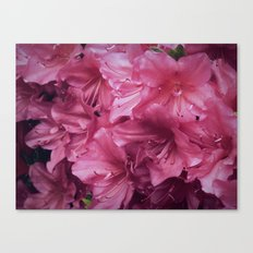 Pink Rhododenrons Canvas Print