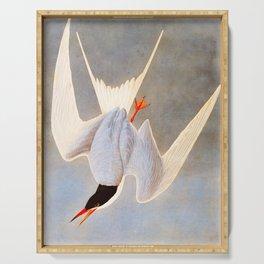 Great Tern Vintage John James Audubon Scientific Bird Illustration Serving Tray