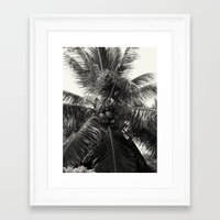 coconut wishes Framed Art Prints featuring Coconut! by Chandon Photography