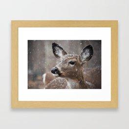 Deer in the snow Framed Art Print