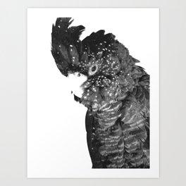 Black and White Cockatoo Illustration Art Print