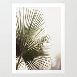 Palm Leaf Tropical Art Print