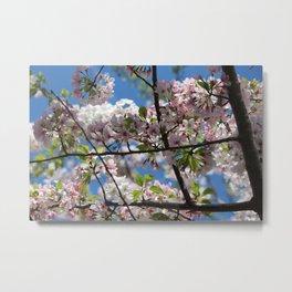 Natural Frame Metal Print