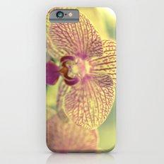 Orchid Ⅲ iPhone 6s Slim Case