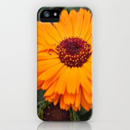 orange yellow gerbera daisy in the vase iPhone Case