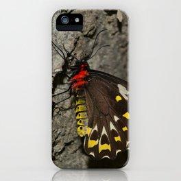 Birdwing Butterfly iPhone Case