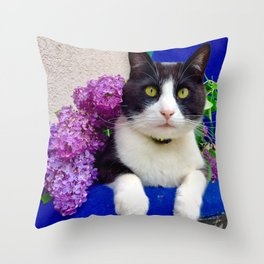 Orazio charming cat in the blue Throw Pillow