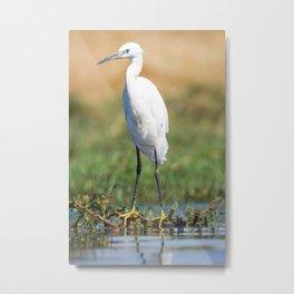 Fishing bird Metal Print