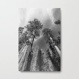 Giant Sequoia Trees in black and white Metal Print
