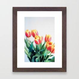 Tulips Against White. Framed Art Print