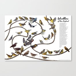 Warblers of New England Canvas Print