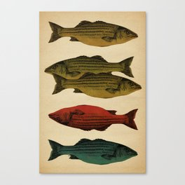 One fish Two fish... Canvas Print
