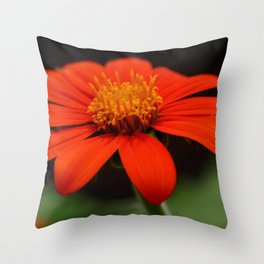 Red African Daisy Throw Pillow