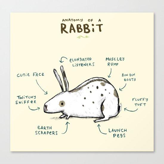 Anatomy of a Rabbit Canvas Print