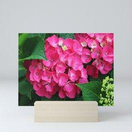 Spring Hydrangea Mini Art Print