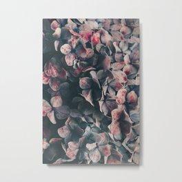 hydrangea - moody blues Metal Print