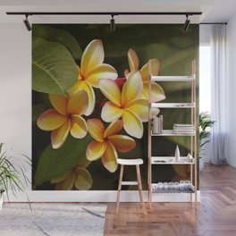 Elegant Simplicity is the Hawaiian Plumeria Wall Mural