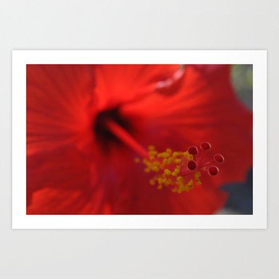 Hibiscus center puff Art Print