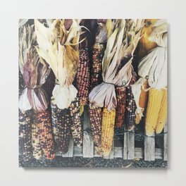 Fall Corn Metal Print