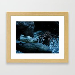 Lobster and the Eels Framed Art Print