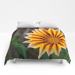 Close Up Tiger Gazania in Red, Gold and Green  Comforters