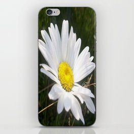 Close Up of a Margarite Daisy Flower iPhone Skin