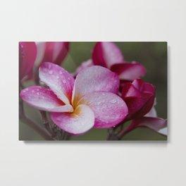 Pua Melia Floral Celebration Metal Print