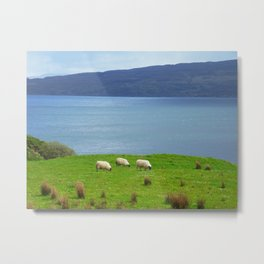 three sheep grazing Metal Print