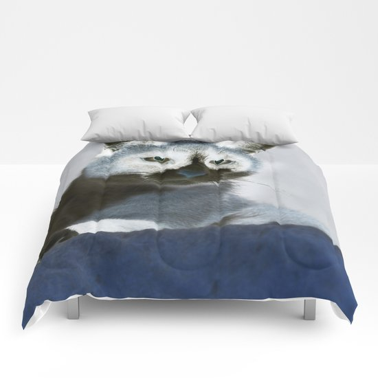 Blue Snow Shoe Cat on the Prowl Comforters
