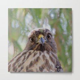 Hawk Eyes in the Willow Metal Print