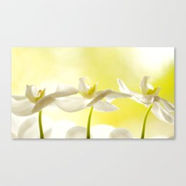 Three Ballerinas Canvas Print