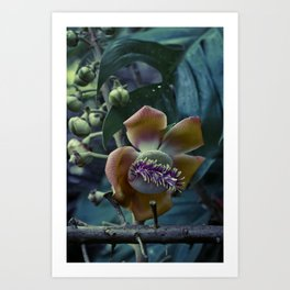 Little shop of cannonball blooms Art Print