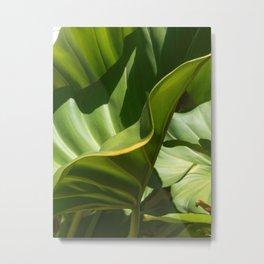 On the Edge, tropical plant study Metal Print